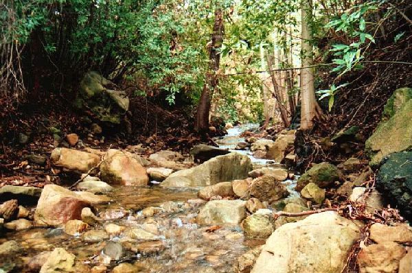 canyonstreams.jpg (90956 bytes)