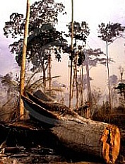rainforest.jpg (30972 bytes)